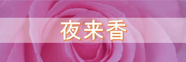 天満・天神橋のチャイナエステ(中国エステ)夜来香