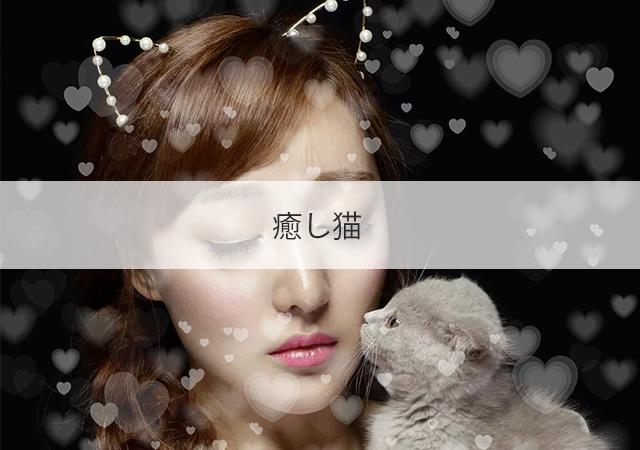 大阪 新大阪 チャイエス 癒し猫